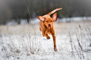 Hund der freudig zurückkommt