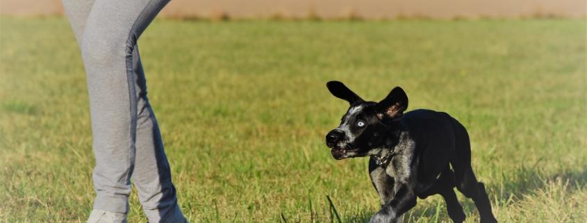 Junghunde und Einsteiger